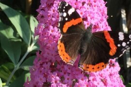 In the garden of the butterfly house