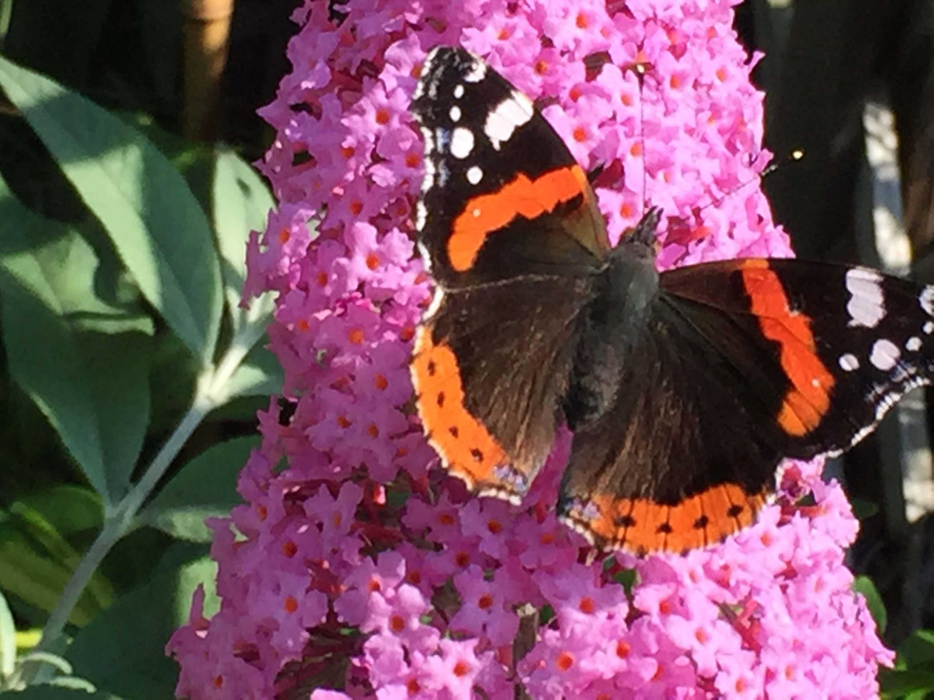 Casa Traca vlinders in de tuin