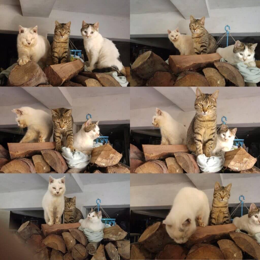 Casa Traca de katten