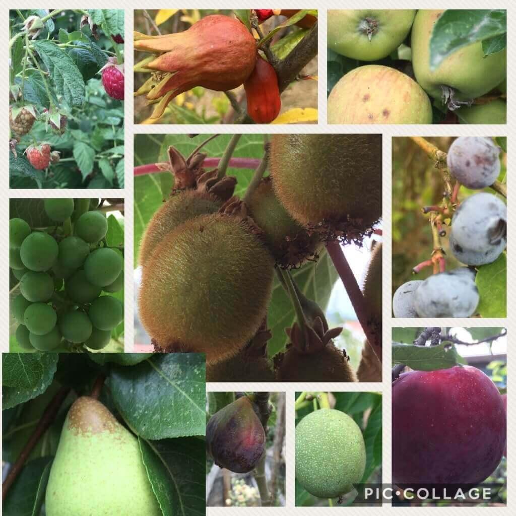 Casa Traca compilatie fruit uit eigen tuin