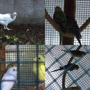 Casa Traca voliere vogels