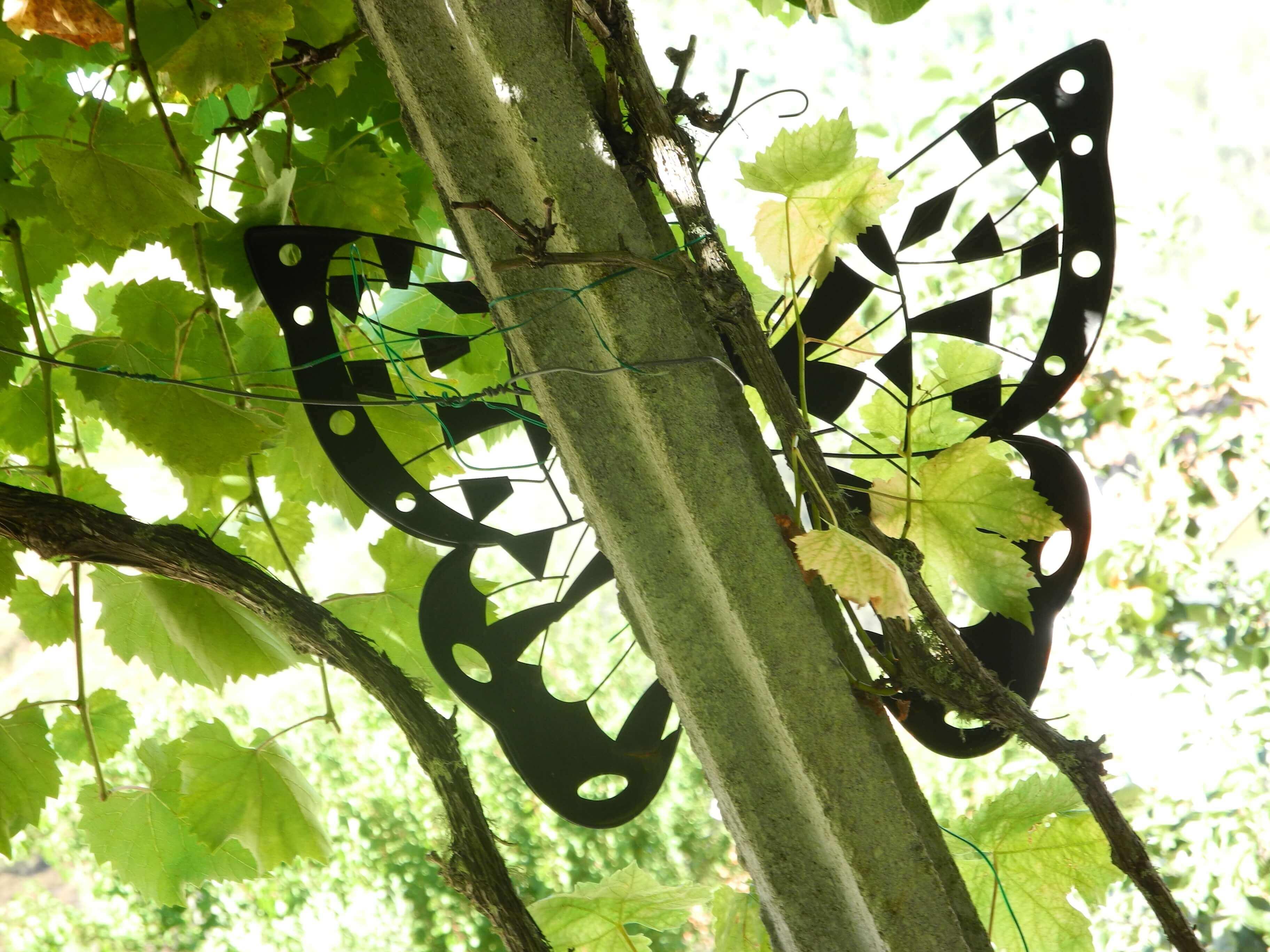 Casa Traca vlinder oosters terras