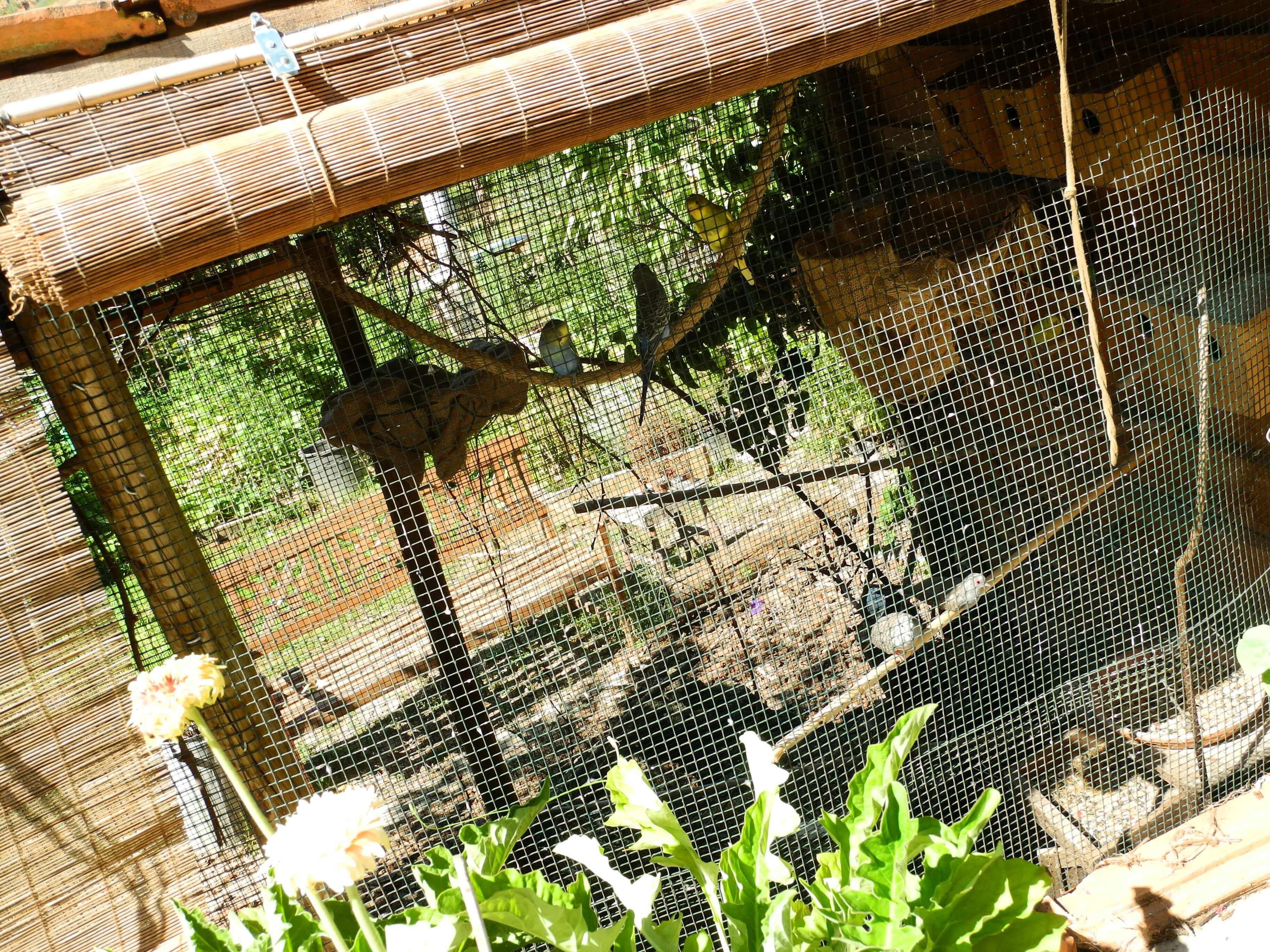 Casa Traca de voliere vogels