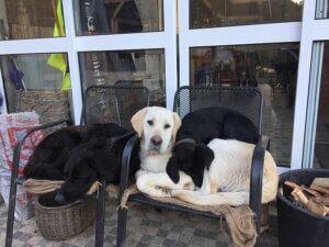 honden bij Casa Traca