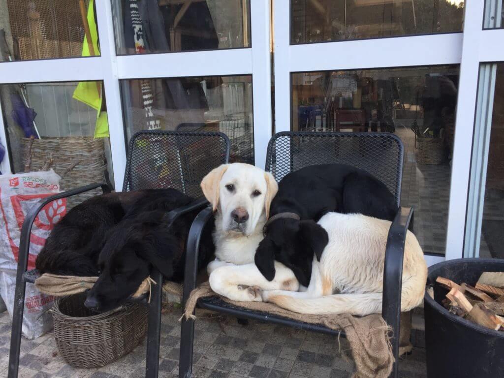 Casa Traca; Ons honden trio: Teun, Joep en Geis