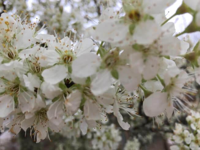 Casa Traca Centraal Portugal voorjaar bloesem