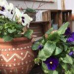 Casa Traca voorjaar 1