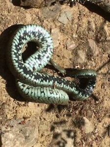 Ontmoeting met een slang